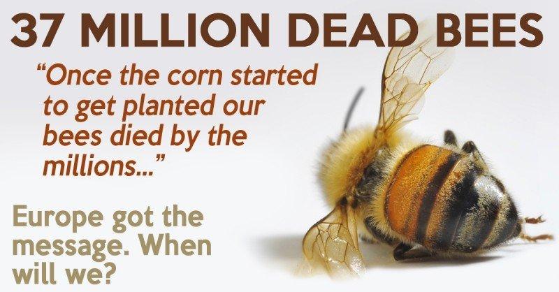 37 miliónov včiel mŕtvych: môžu za to neonikotinoidy
