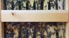 Sieť dobra odštartovala spoločné včelárenie